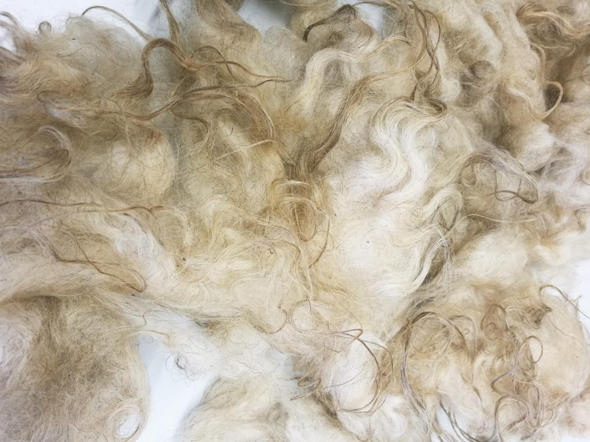Unbearbeitete Wolle